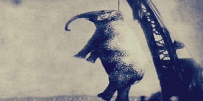 قصة إعدام الفيلة ماري قطعة بطيخ انتهت بها إلى حبل المشنقة Moose Art Animals Art