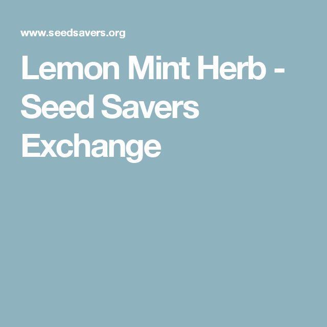Lemon Mint Herb - Seed Savers Exchange