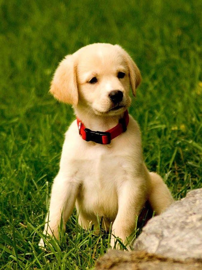 35 Cutest Dog Photo Ideas That Re So Darn Adorable Adorable