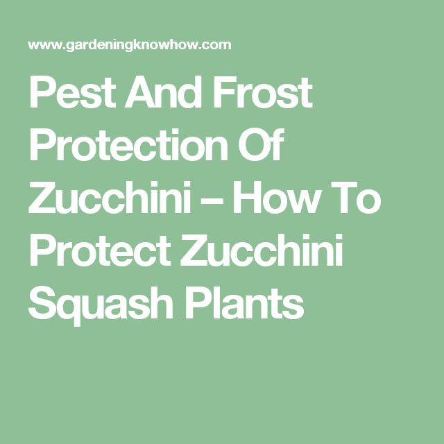 Pest And Frost Protection Of Zucchini – How To Protect Zucchini Squash Plants