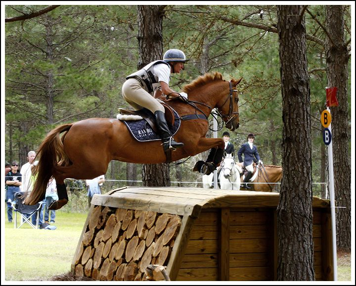 Horses jumping cross country - photo#32