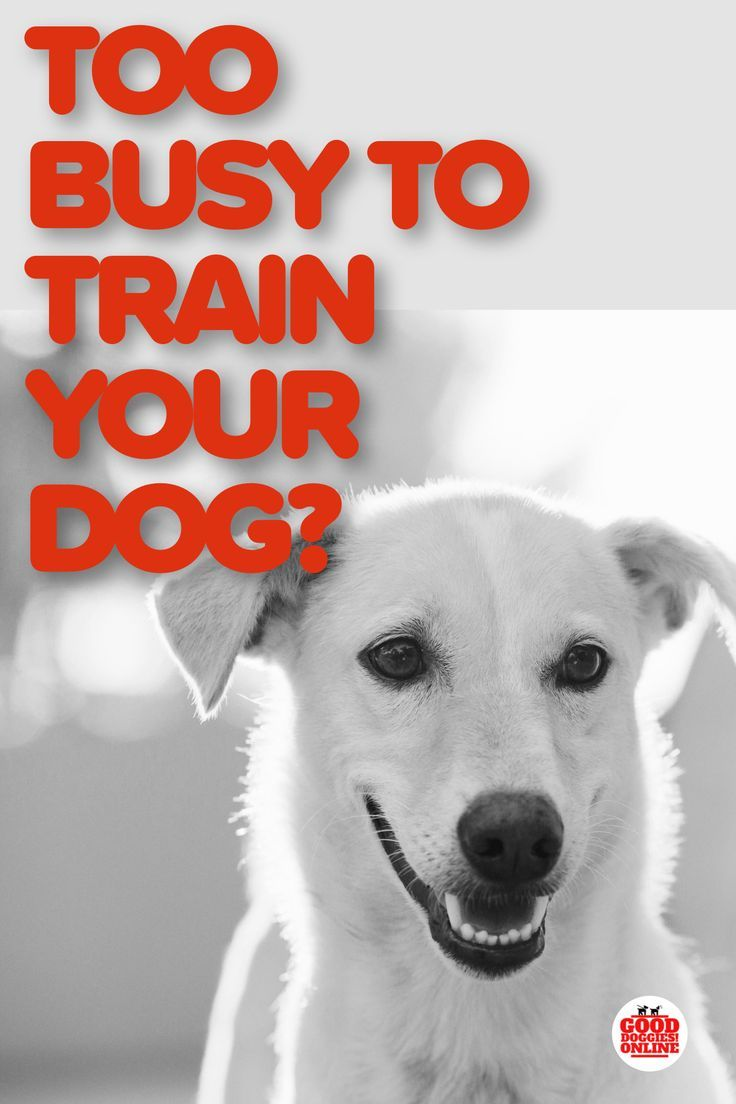 3 Best Dog Training Solutions For Busy Pet Parents Dog Training