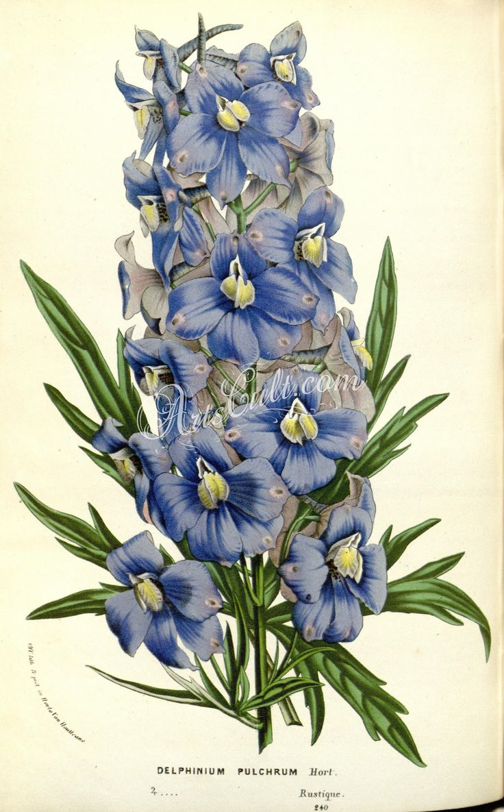Delphinium flower tattoo http refreshrose blogspot com - Delphinium My Tattoo Inspiration Pinterest