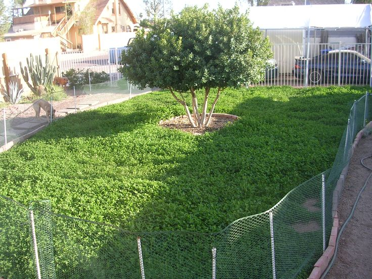 10 best YARD images on Pinterest | Landscaping ideas, Yard ideas and ...