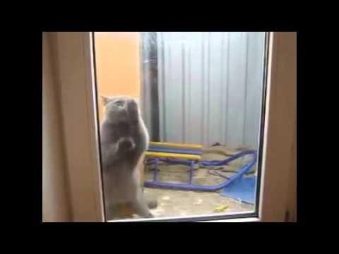 Коты - моют окна без РАЗВОДОВ, не ПРИКОЛ ! Cats wash windows