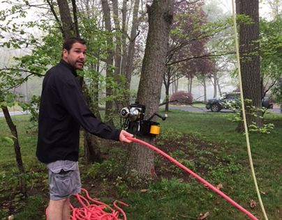 "Check out new work on my @Behance portfolio: ""Tree Trimming Service in Catonsville"" http://be.net/gallery/51924885/Tree-Trimming-Service-in-Catonsville"