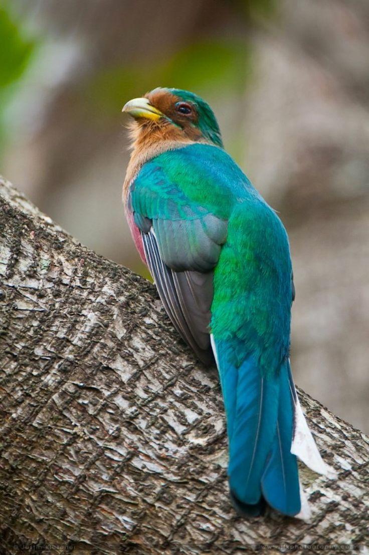 12 best birds names u0026 habitats images on pinterest tropical