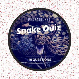 Snake Quiz – Think You Know About Snakes ? #snakes #petrage #pets #animals