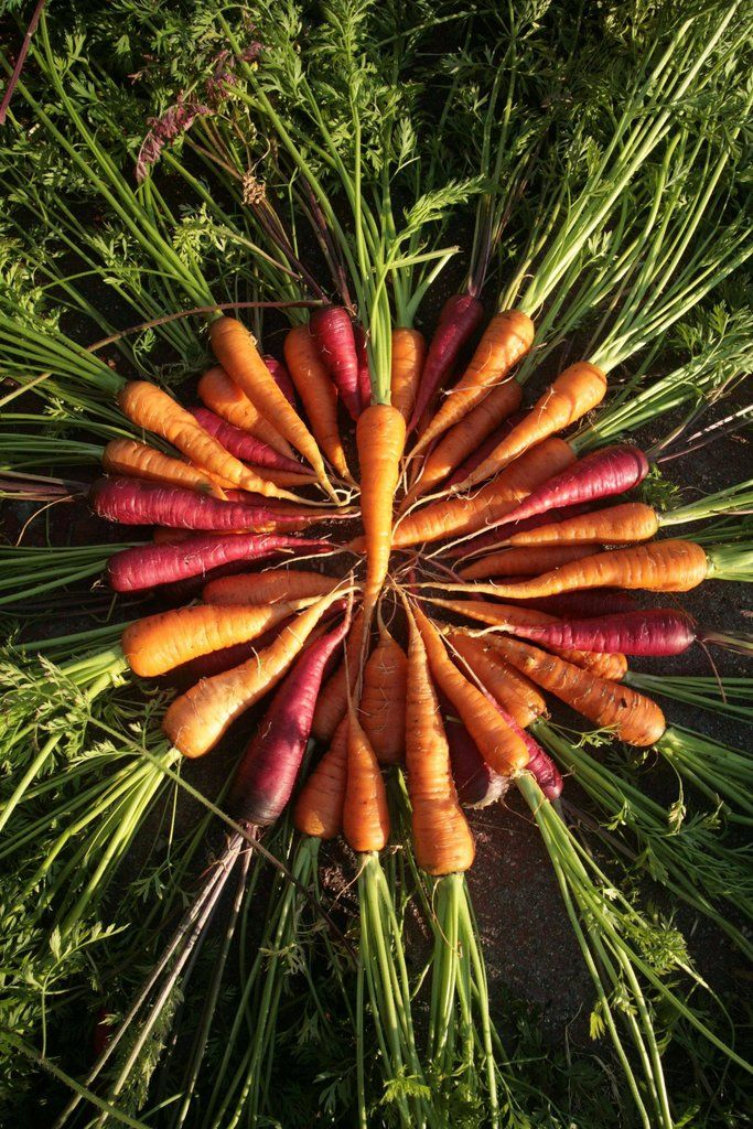 """""""He grew carrots by the bucketful."""" - The story of a man who grew a vegetable garden instead of a front lawn."""