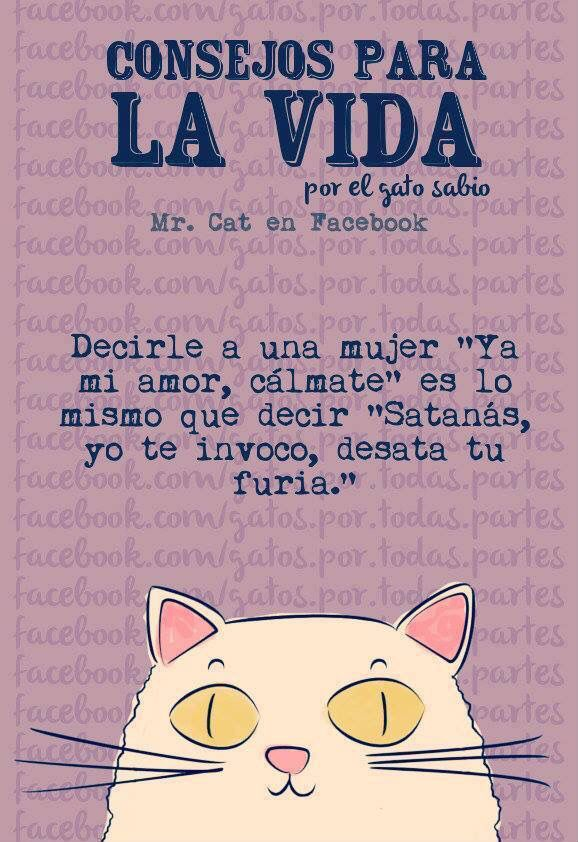 Gato Consejero :)
