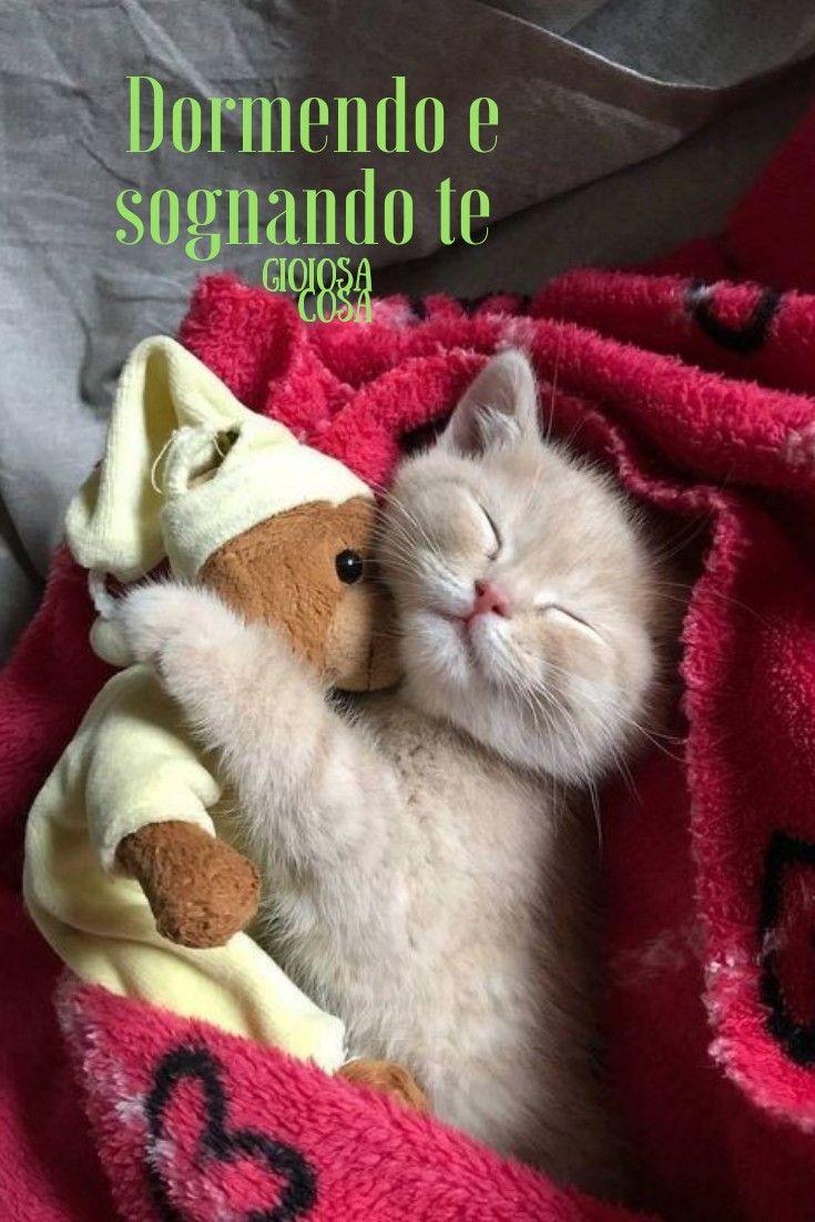Buonanotte cucciolo di gatto peluche pupazzo coccole dolci sogni ...
