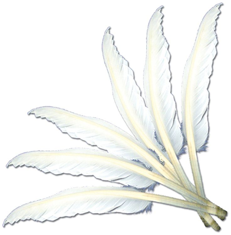 Amazon.com: Touch of Nature 38202 Indian Feather, 7 to 8-Inch, White