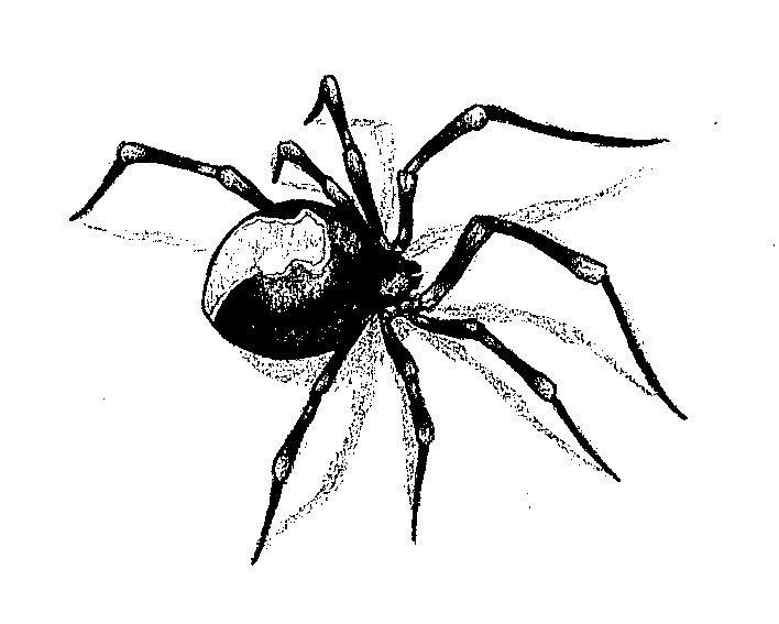 Тату паук картинки