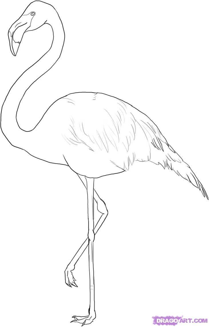 Flamingo Outline | how to draw a greater flamingo step 5