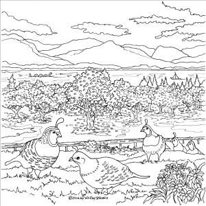 Quails – Naramata Bench Wine Country, a colouring book designed and Illustrated by Joy Whitley Syskakis of Colour the Okanagan Illustrations Company. Request YOUR very own copy today via our website! All images and illustrations are Copyright protected!