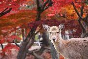 Autumn Color Report 2011
