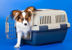 Alaska Introduces New Perks for Pets   (SmarterTravel.com 04.10.12 email)