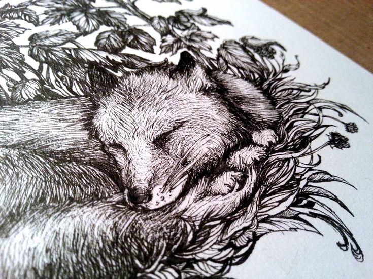 Cute Fox Sleeping Drawing Illustration