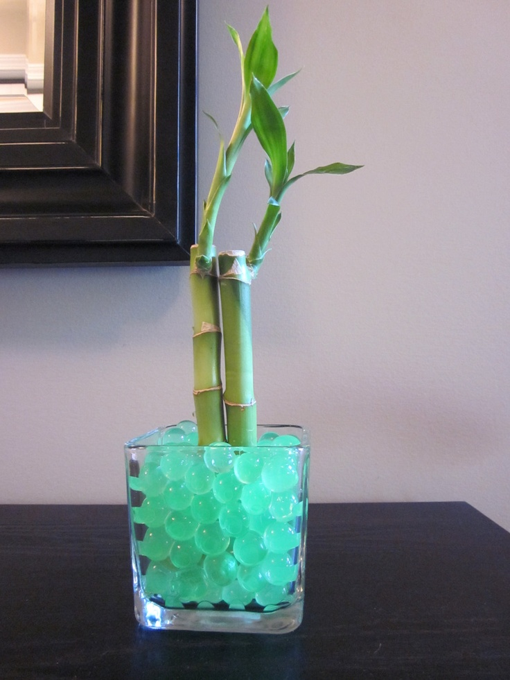 Lucky Bamboo With Water Beads And Vase Great For Dorm