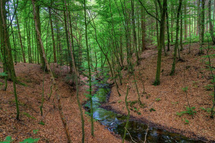 Forårstur til Bidstrupskovene