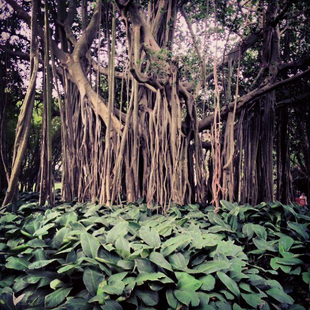Durban Botanical Gardens, South Africa