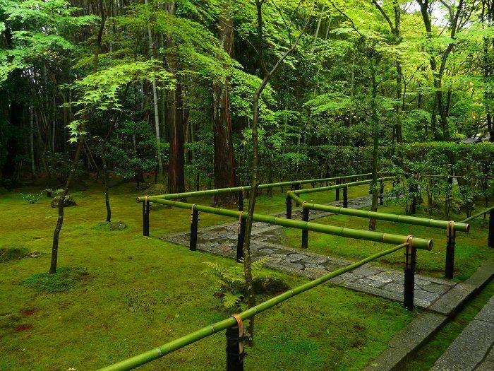 高桐院:新緑の石畳参道