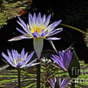 African Waterlily Dazzle -- Plus Dragonfly Poster by Byron Varvarigos
