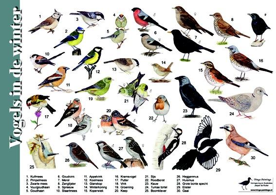 Zoekkaart / Herkenningskaart Vogels in de winter