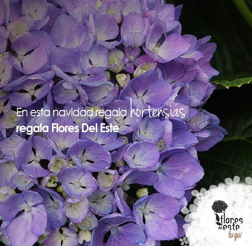 #hortensias #sorprende #regala #floresdelestetogo #floresdeleste #martes