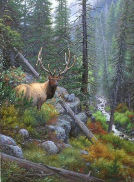Champion by Mark Keathley ~ elk forest stream