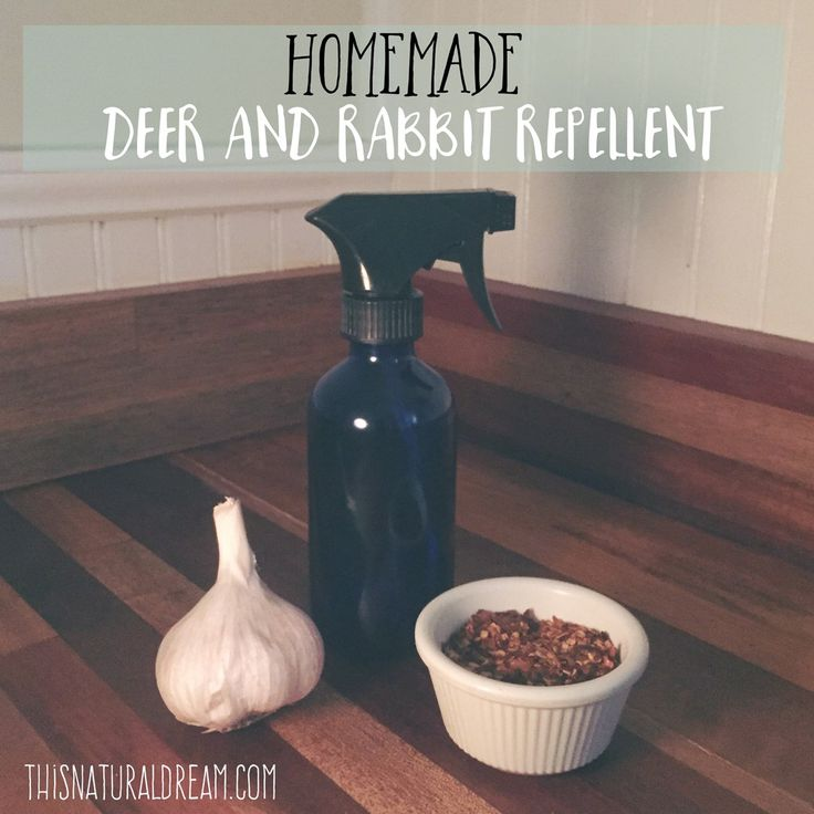 Our natural homemade rabbit and deer repellent works like a charm. This easy to make recipe is a staple on our homestead keeping our gardens safe and sound.