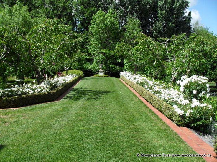 Long Walk | White Carpet Roses | Moondance Manor Gardens NZ