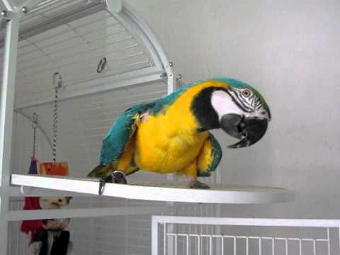 Wilton Parrot Rescue YouTube Channel (or find their facebook page for more information)