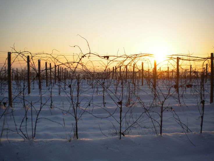 #capriva #collio #brda #fvg #snow #winelovers