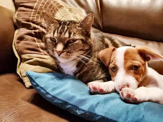 Jodie, adopted in August, and her new friend. <3 Isn't this just the cutest picture?
