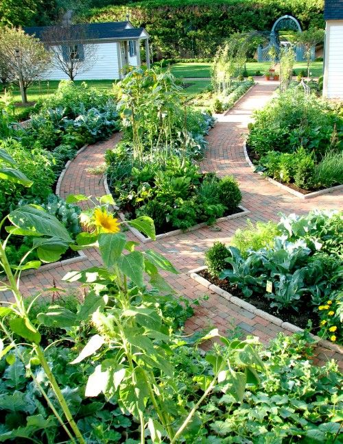 Love this veggie garden with its winding paths. What a cute little garden shed in the distance.