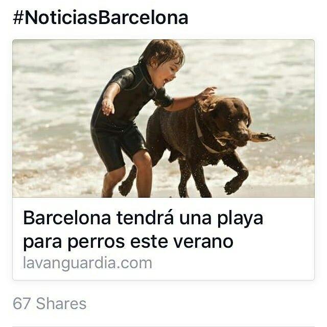 También en #Valdevaqueros ??? #perrosenlaplaya #perros #sol #playa #Tarifa #EspírituGuau