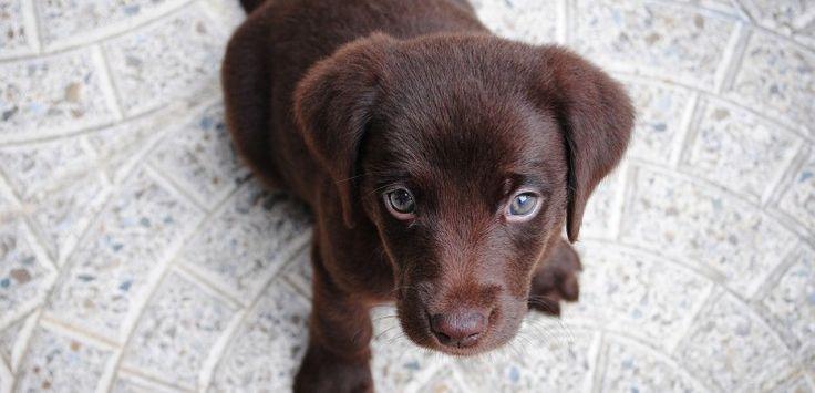 Erstausstattung für den Hund – laufende und fixe Kosten