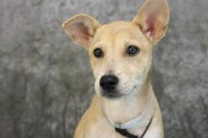 Greenville County Adoptable Dogs