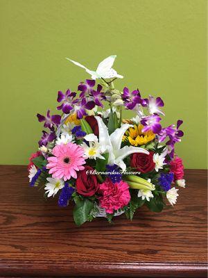 Bernardo's Flowers: BF-M3 Price: $69.99