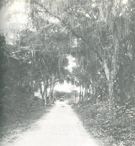 Vintage Sarasota: Fruitville Road, Early 1900s | Blogs | SarasotaMagazine.com