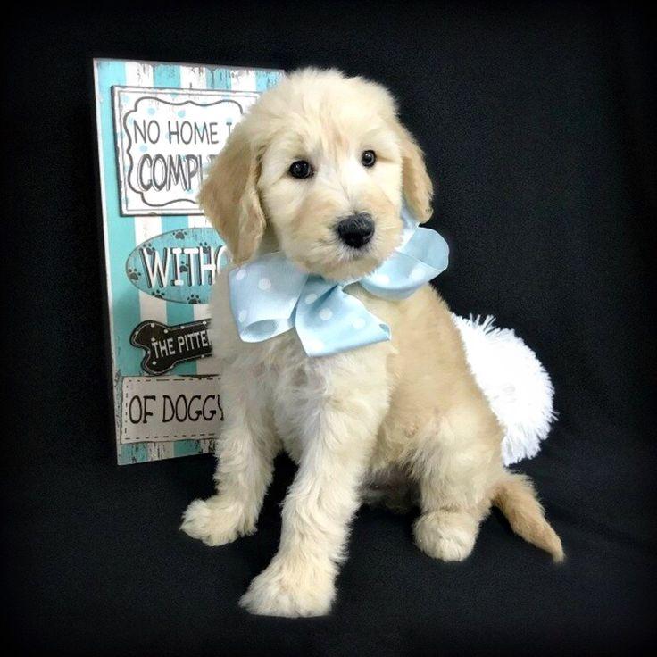 Puppy Socialization Classes Chicago Ideas