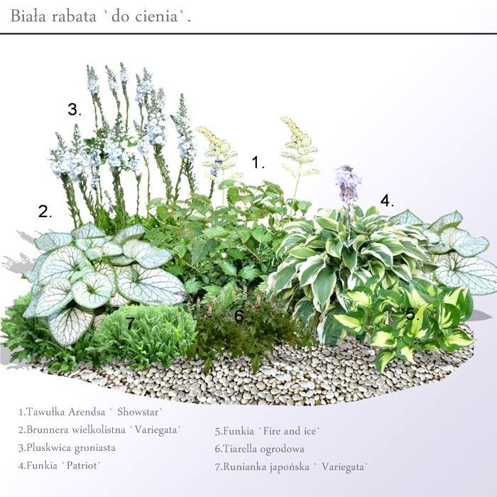 Biala Rabata W Dwoch Wersjach Na Slonce I Do Cienia In 2020 Flower Landscape Landscape Plans Garden Design Plans