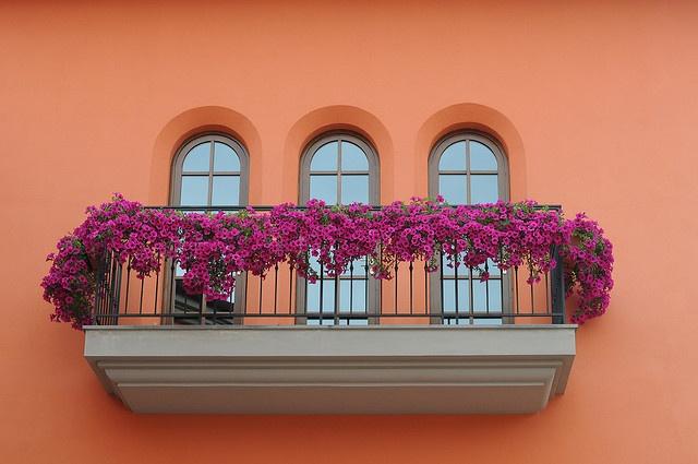 mediterrán fal, lila petúniával