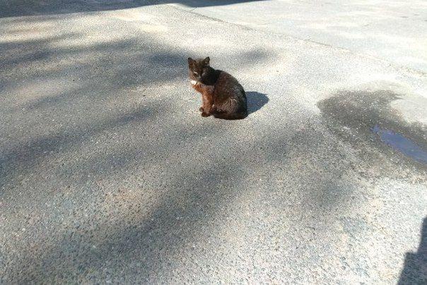 Кошка на асфальте  #кошка #асфальт #лужа Подробнее на https://vk.com/wall-148270444_307