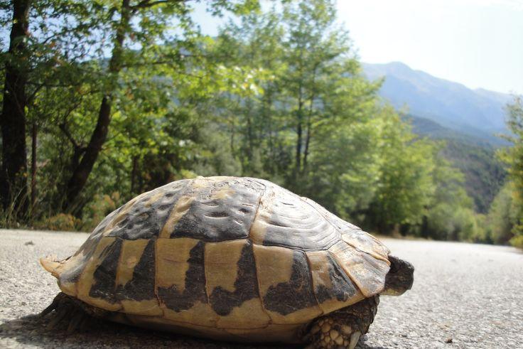 on the road to Tzoumerka