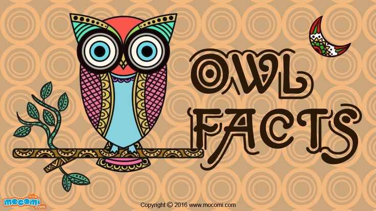 Owls can rotate their necks at 270 degrees, 135 degrees on either side. Many owls have asymmetrical ears. They are carnivores.  More fun owl facts. Read More GK facts for Kids, visit: http://mocomi.com/learn/general-knowledge/