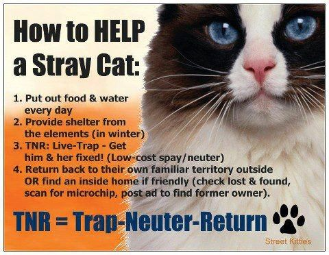 How To Get A Feral Cat To Go Inside Shelter