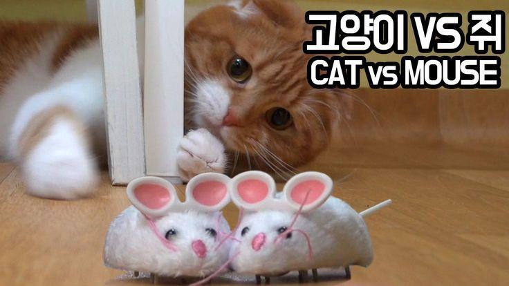 고양이 vs 쥐장난감 CAT vs mouse toy [SURI&NOEL]