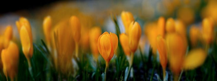 wild flowers by yasin mortaş on 500px